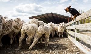 Farm-Experience-BG2